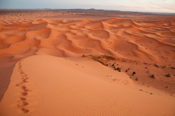 on the red Dune -