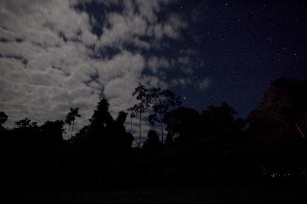 Cepheus from the jungle -